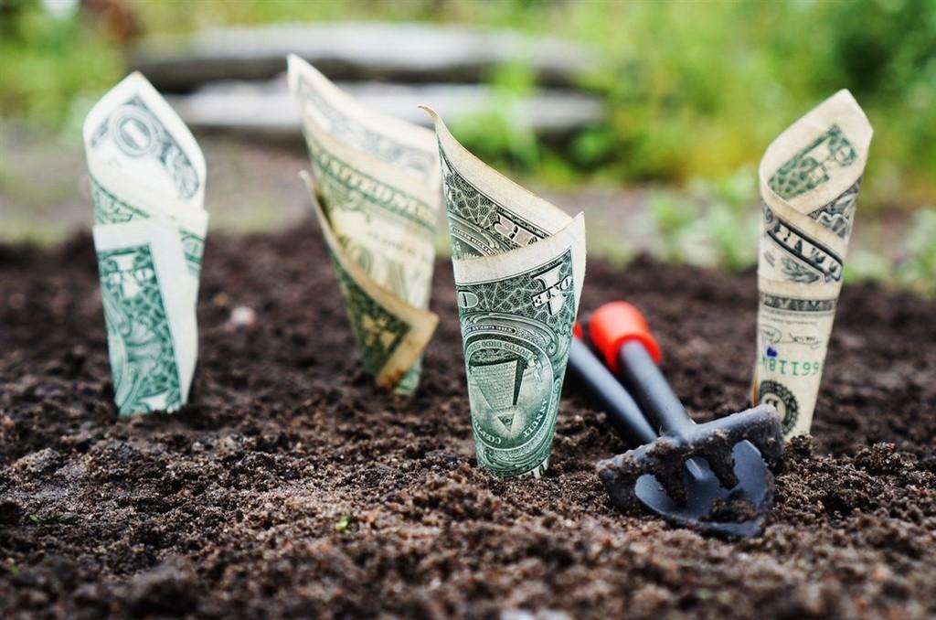 dollars plant