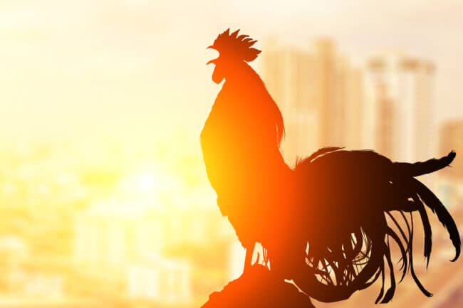 Roosters and other pets chime in customer service calls as agents work from home